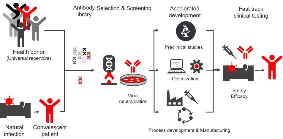 CORAT Neutralisating Antibody development