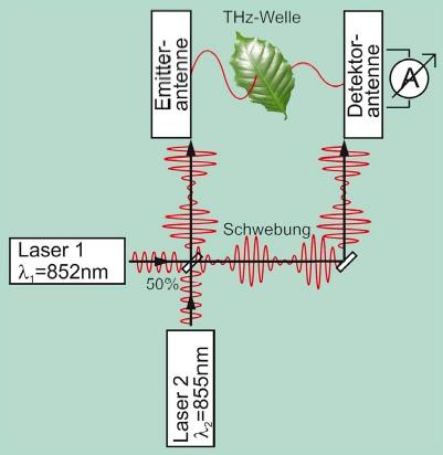 Messungs des Blattwassergehalts mittels Terahertzwellen