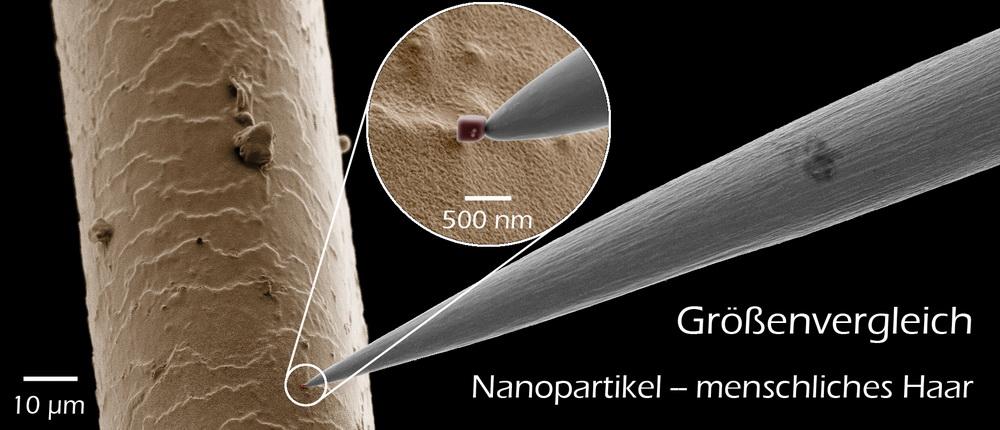 Größenvergleich Nanopartikel - menschliches Haar. Der würfelförmige Nanopartikel befindet sich an der Spitze der Manipulatornadel.