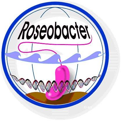 Logo TRR51 SFB Roseobacter