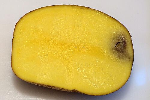 Schwarzfleckigkeit-Kartoffel