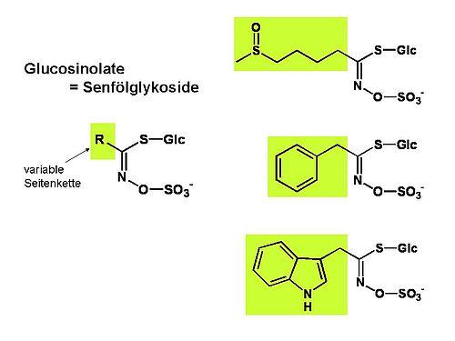 Glucosinolate sind Thioglucoside mit variabler Seitenkette